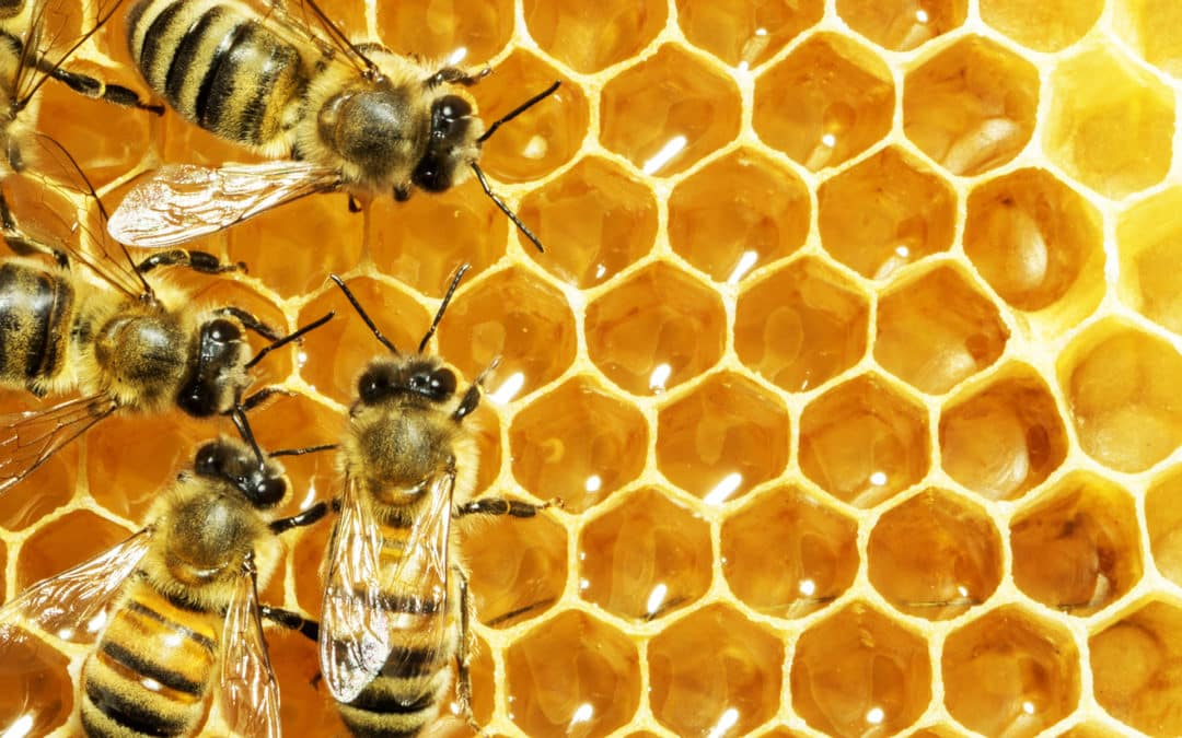 Data Security (Scale and Bees)